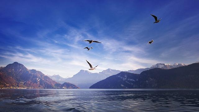 Gulls, Birds, Wing, Flying, Freedom, Animal, Sky, Water