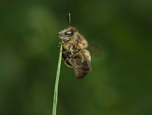 Insect, Nature, Animal, Wildlife, Wing