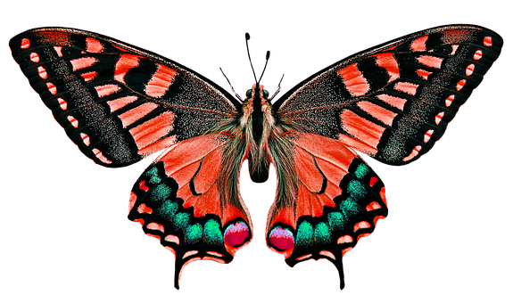 Nature, Animals, Butterfly, Insect, Fly, Wing, Probe