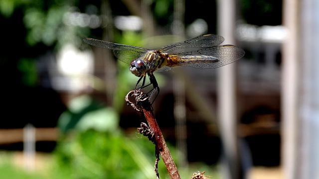 Insect, Nature, Fly, Animal, Wing, Dragonfly, Closeup
