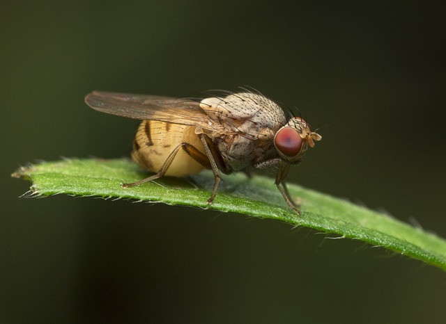 Insect, Fly, Wing, Animal, Nature