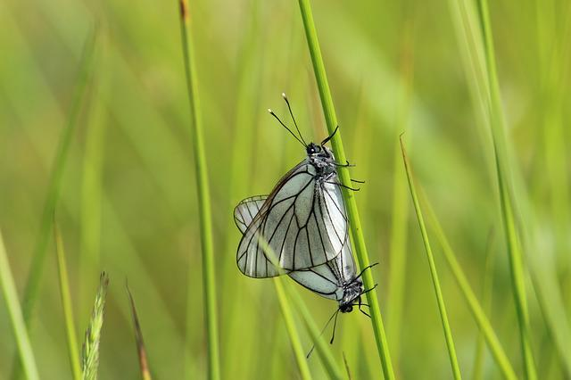 Insect, Nature, Butterfly, Summer, Grass, Wing