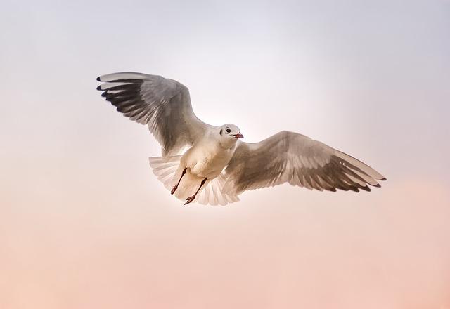 Seagull, Nature, Animal, Bird, Wing, Float, Sky