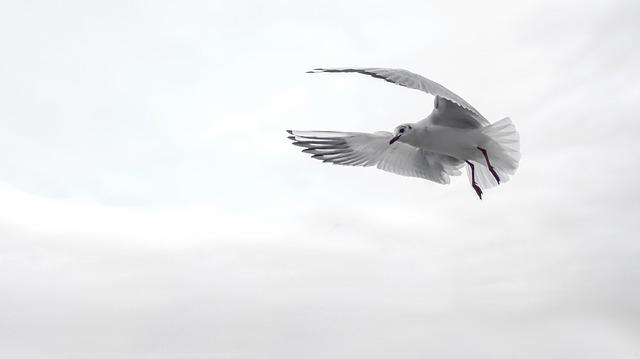 Gull, Wing, Bird, Sea, Flying, Venice, Water Bird
