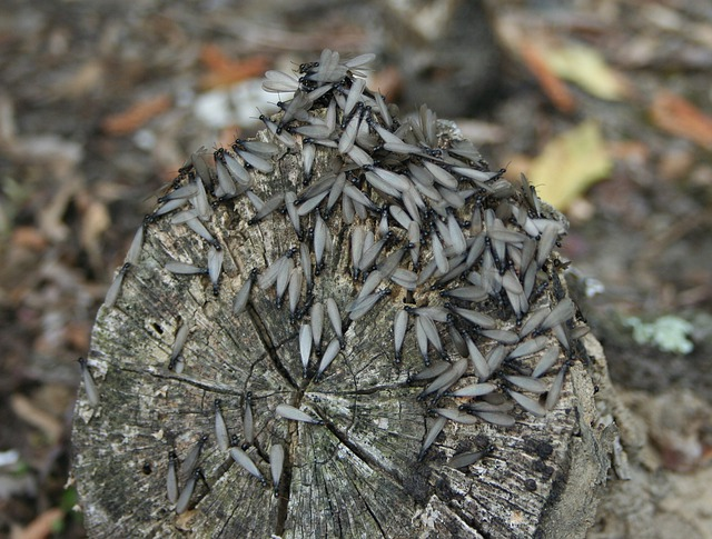 Termites, Wings, Insects, Wing, Wildlife, Bug, Small