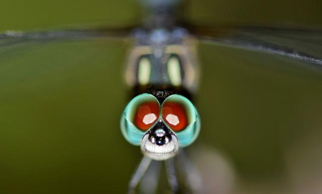 Dragonfly, Insect, Bug, Winged Insect, Flying Insect