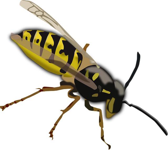 Wasp, Hornet, Bee, Insect, Sting, Yellow, Black, Wings