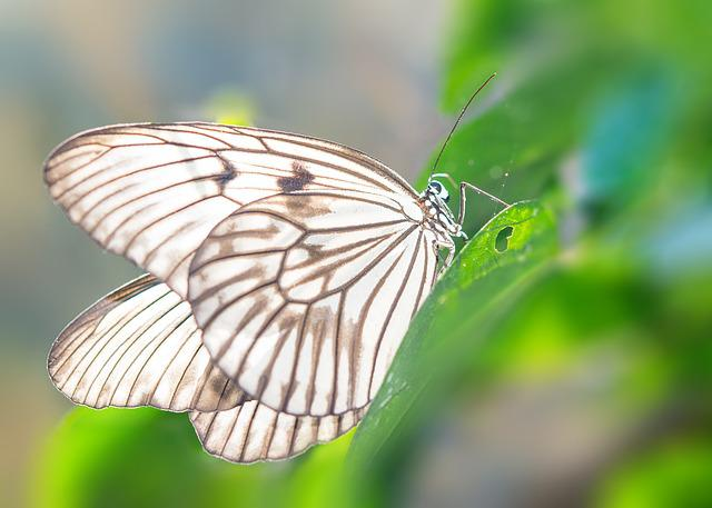 Butterfly, Green, Animal, Insect, Wings, Macro