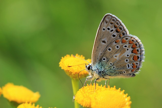 Butterfly, Flower, Insect, Nature, Wings, Europe