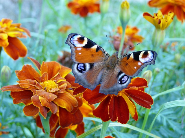 Butterfly, Flower, Orange, Wings, Butterfly Wings