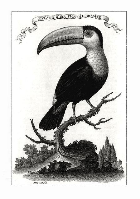 Toucan, Bird, Brazilian, Fowl, Feathers, Wings, Beak
