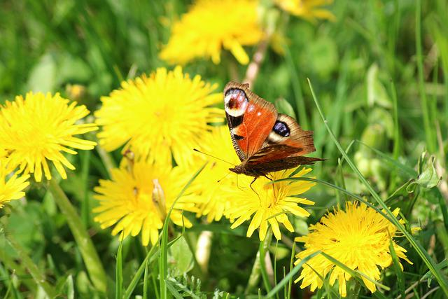 Spring, Butterfly, Meadow, Insect, Nature, Plant, Wings