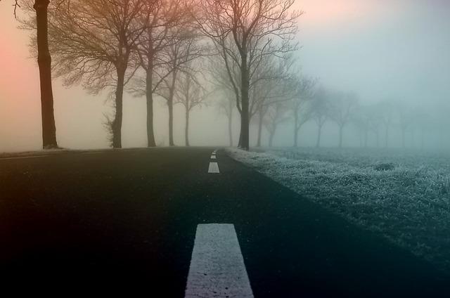 Road, Avenue, Trees, Asphalt, Tree Lined Avenue, Winter