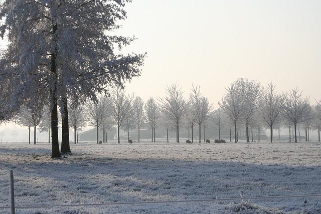 Winter Beauty, Winter Portrait, Winter Trees