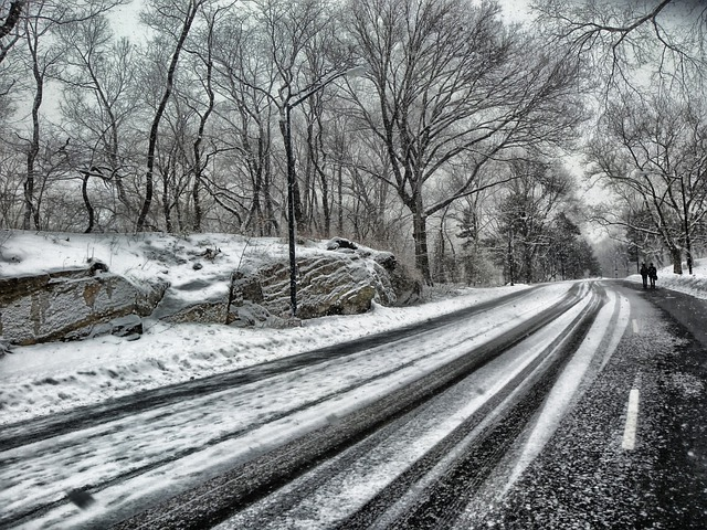 Central Park, New York City, Road, Trees, Winter, Snow