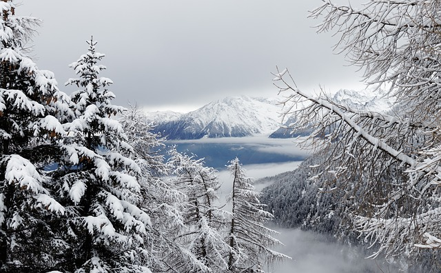 Winter, Snow, Christmas, Fog, Forest, Landscape