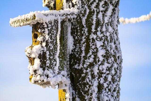 Aviary, Winter, Cold, Winter Mood, Hoarfrost