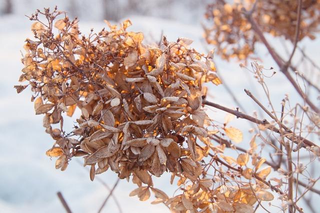 Dead Leaves, Winter, Snow