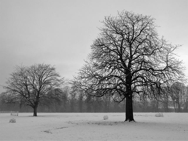 Tree, Landscape, Wood, Winter, Fog