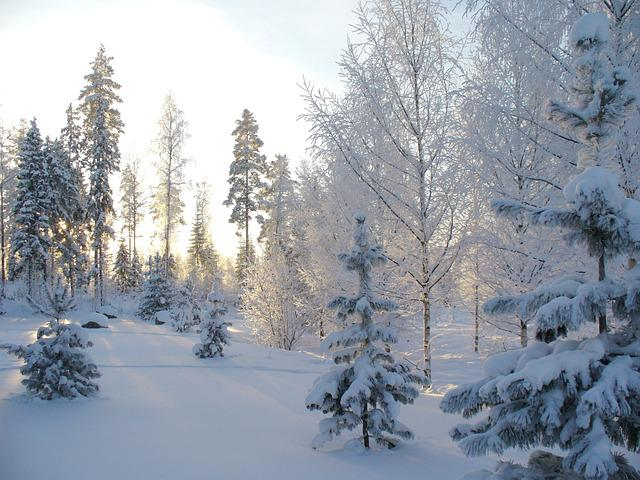 Winter, Forest, Winter Forest, Snow, Pine, Landscape