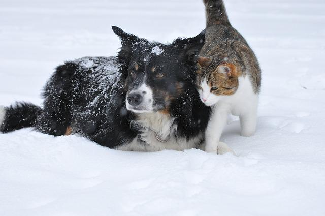 Dog, Cat, Snow, Cute, Pet, Sweet, Winter, Friendship