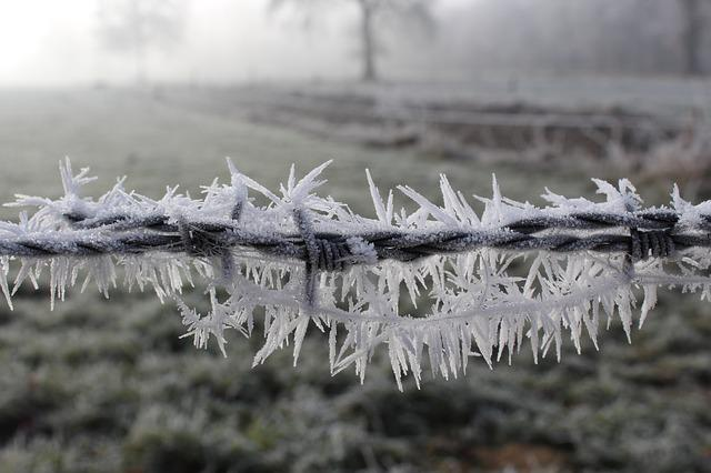 Frost, Cold, Winter, Frozen, Nature, Frosty