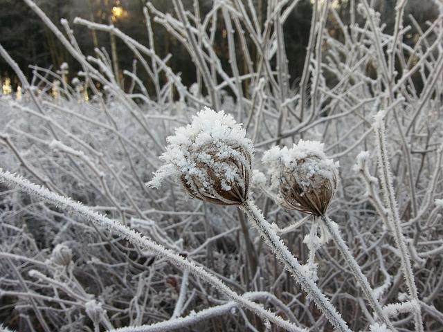 Winter, Frost, Landscape, Plant