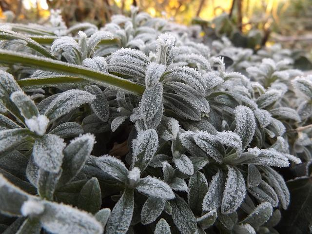 Ice, Cold, Winter, Gel, Frost, Nature, Frozen Leaves