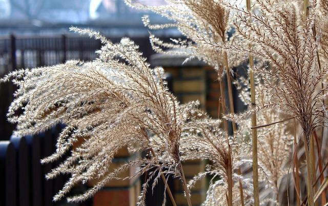 Grass, Dry Grass, Winter, Nature, Frost, Cold, Dead