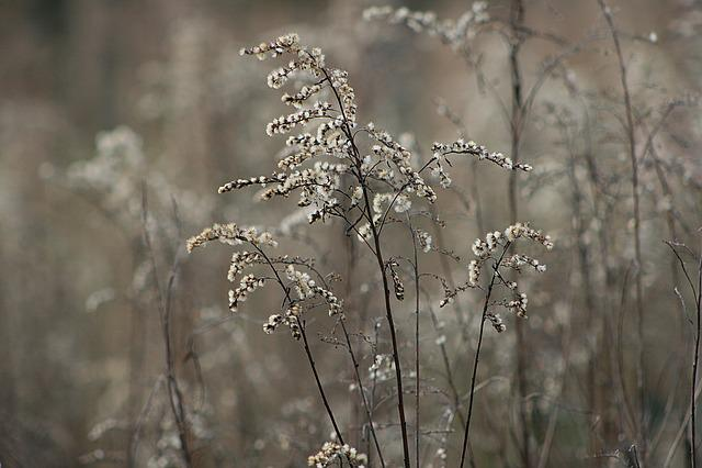 Nature, Season, Frost, Winter, Grass, Golden Rod