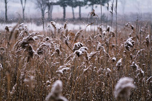 Nature, Season, S, Outdoors, Grass, Winter