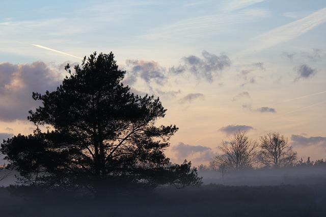 Winter, Heide, Forest, Fir Tree, Veluwe, Landscape