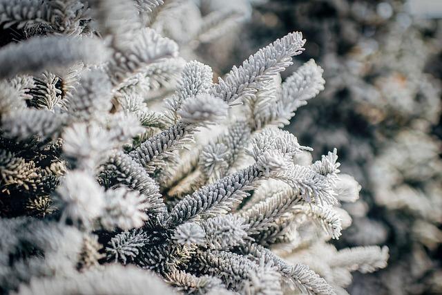 Winter, Snow, Ice, Frost, Hoarfrost, Frozen, Forest