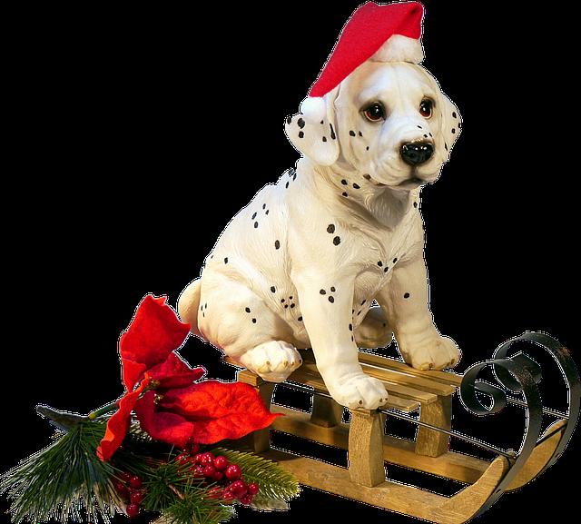 Isolated, Dog On Sledge, Christmas, Winter