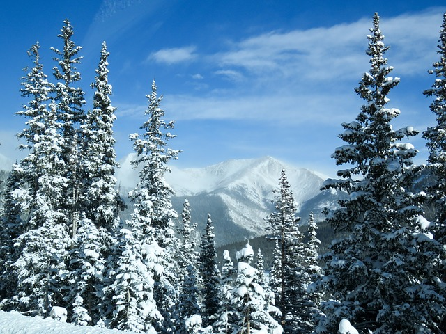 Mountains, Trees, Snow, Winter, Landscape, Colorado