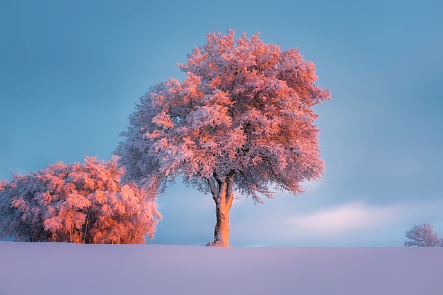 Winter, Snow, Frost, Hoarfrost, Trees, Landscape