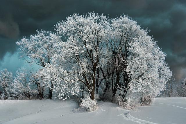 Landscape, Tree, Snow, Sky, Clouds, Path, Winter, White