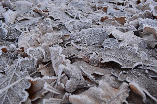 Leaves, Frost, Winter, Cold, Ripe, On Frozen