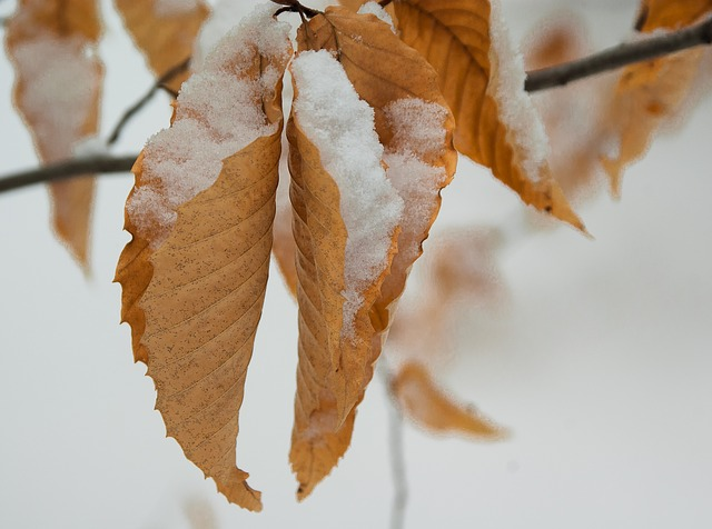 Leaves, Snow, Winter