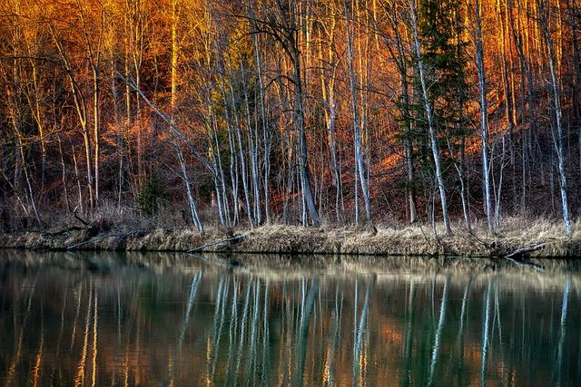 Forest, Winter, River, Lech, Leaves, Abendstimmung