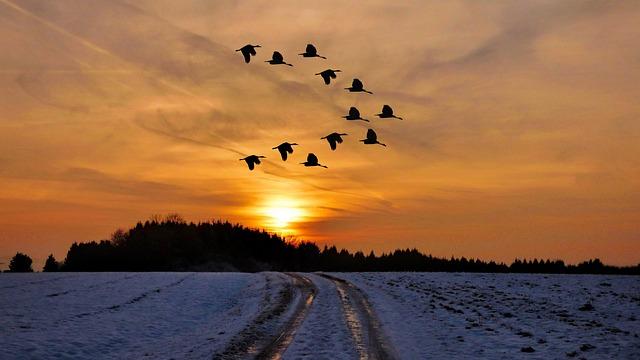 Sunset, Winter, Snow, Cold, Birds, Winter Mood, Wintry