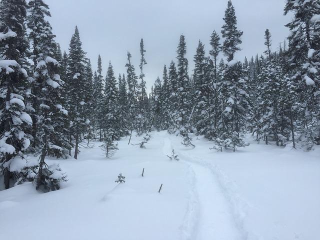 Winter, Ski, Trees, Mountain
