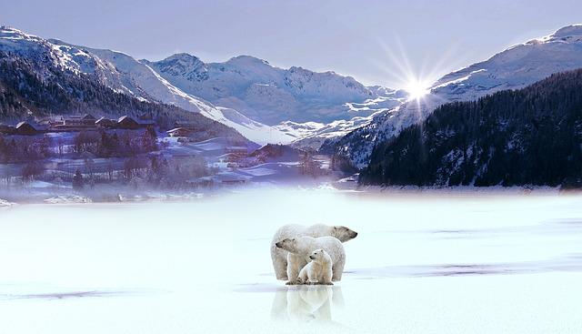 Mountain, Snow, Polar Bear, Winter, Glass, Sun
