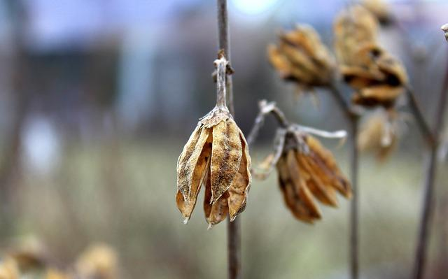 Plant, Dry, No One, At The Court Of, Nature, Winter
