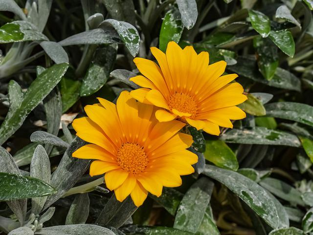Nature, Flora, Winter, Flower, Yellow, Ammophilous