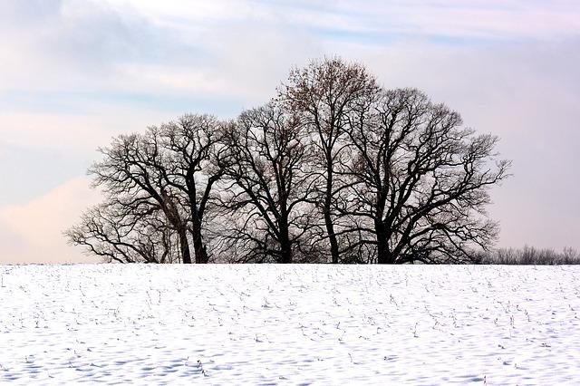 Winter, Trees, Grove Of Trees, Snow, Nature, Mood