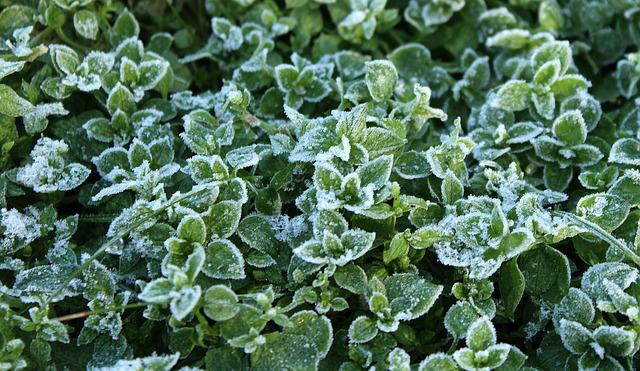 Frost, Leaflet, Winter, Plant, Nature