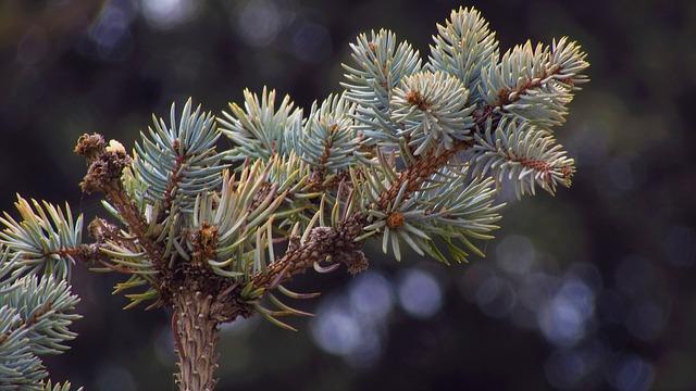 Tree, Sewing Needles, Winter, Nature
