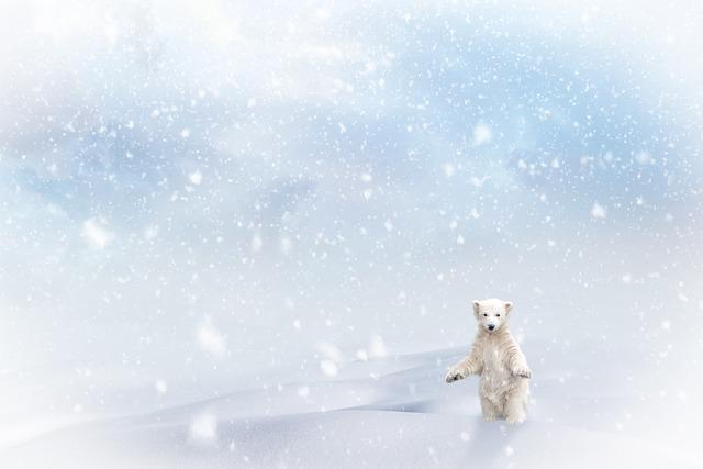 Polar Bear, Snow, Snowfall, Christmas, Winter, Snowing