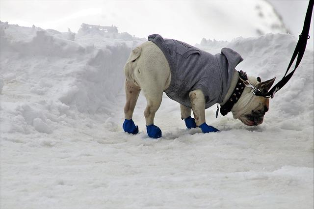 Dog, Shoes, On A Leash, Jacket, Snow, Winter